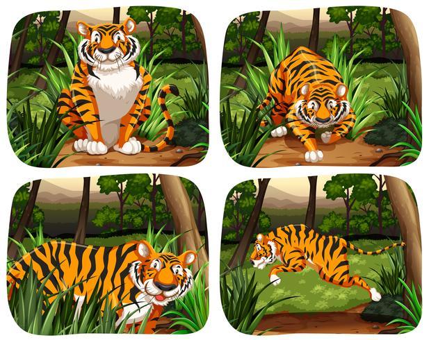 Tigre che vive nella giungla vettore