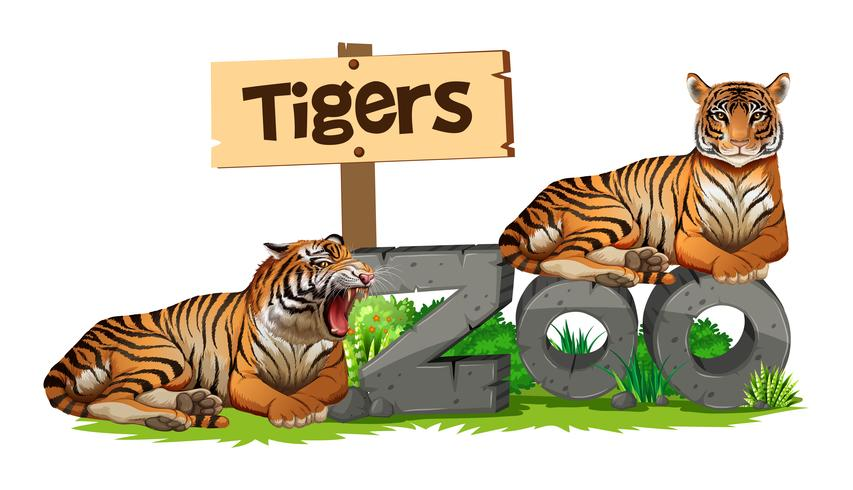 Due tigri sul segno dello zoo vettore
