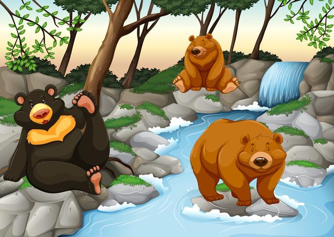 Tre orsi che vivono vicino alla cascata vettore