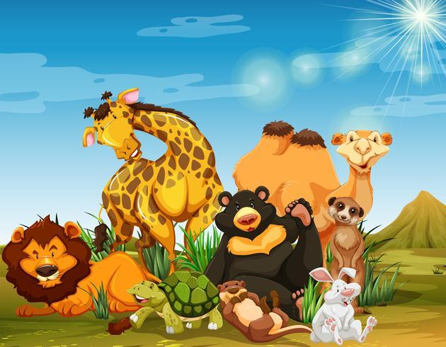 Molti animali selvatici nel campo vettore