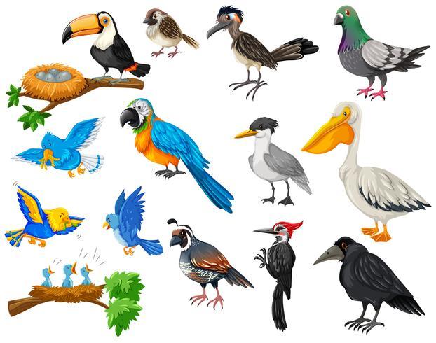 Diversi tipi di uccelli impostati vettore