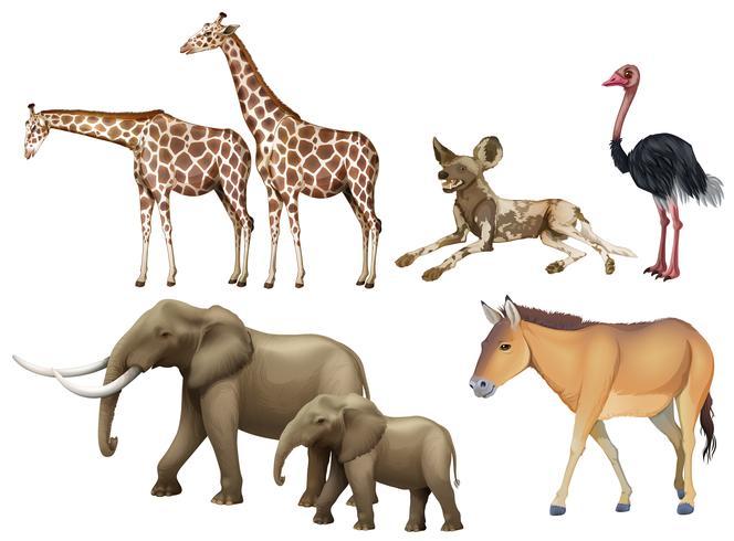 Cinque tipi di animali selvatici vettore