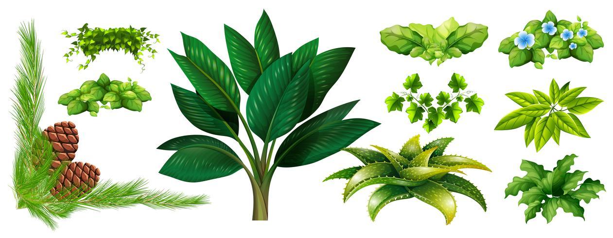 Diversi tipi di piante vettore