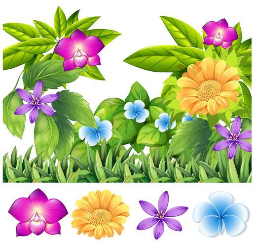Fiori colorati in giardino tropicale vettore