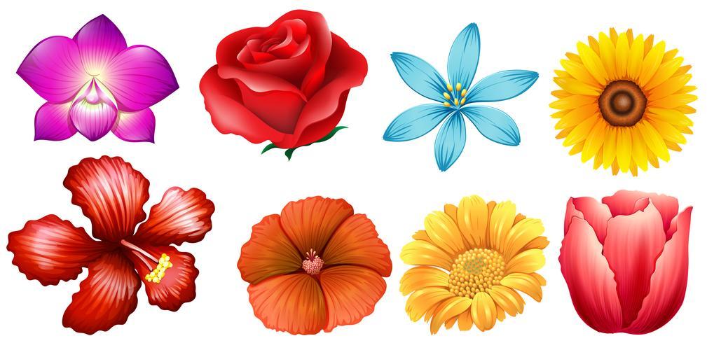 Diversi tipi di fiori vettore