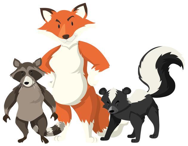 Fox e procione su sfondo bianco vettore