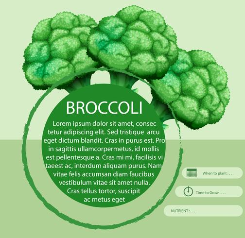 Broccoli freschi con design di testo vettore