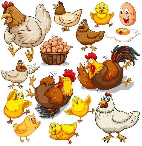 Pollo e uova fresche vettore