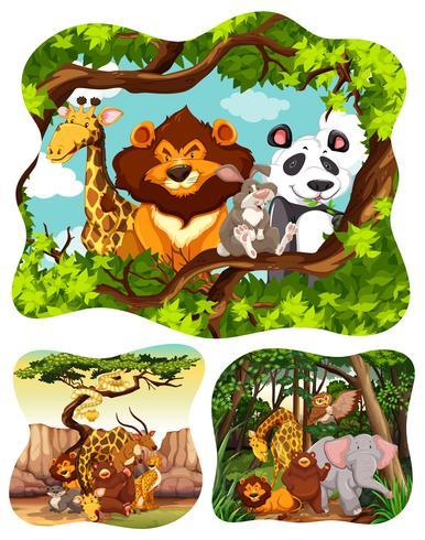 Animali selvaggi nella foresta vettore