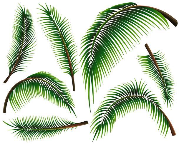 Diverse dimensioni di foglie di palma vettore