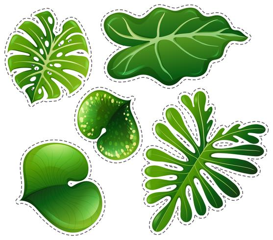Set di adesivi di foglie verdi vettore