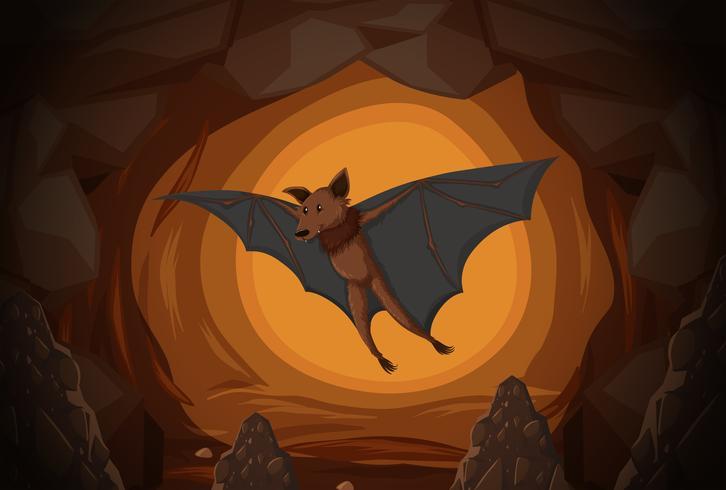 Bat in una grotta vettore