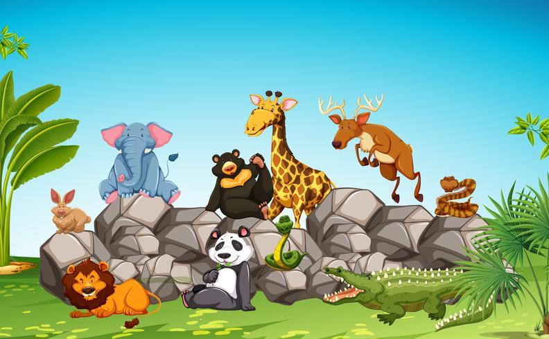 Animali selvaggi che si siedono sulla roccia vettore