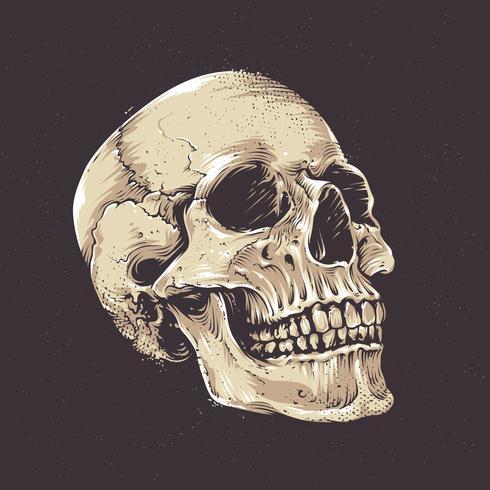 Cranio anatomico grunge vettore