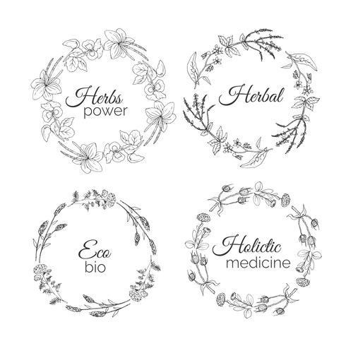 Illustrazione di erbe Cornici floreali vettore