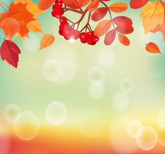 Priorità bassa di autunno con foglie colorate e rowan. vettore