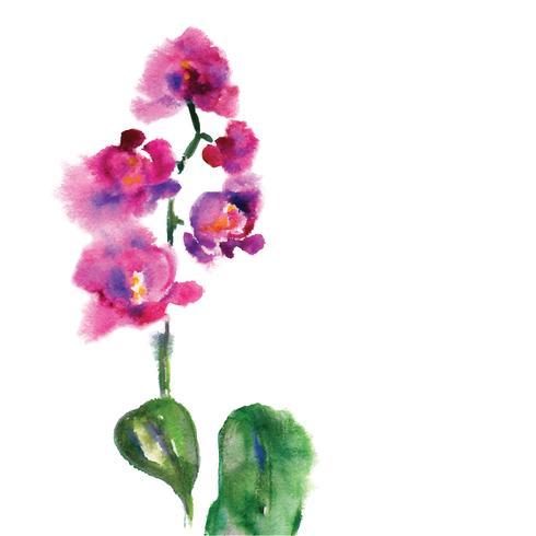 Orchidea rosa isolato su bianco vettore