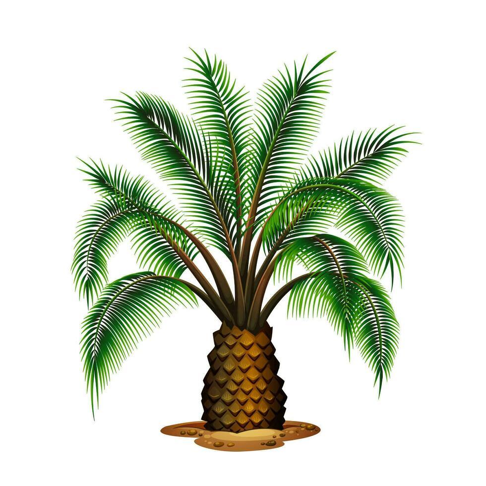 Palma vettore