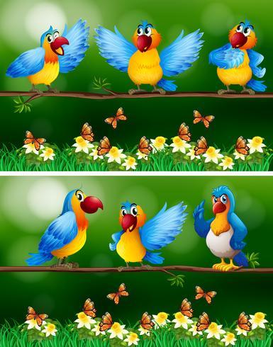 Uccelli pappagallo in giardino fiorito vettore