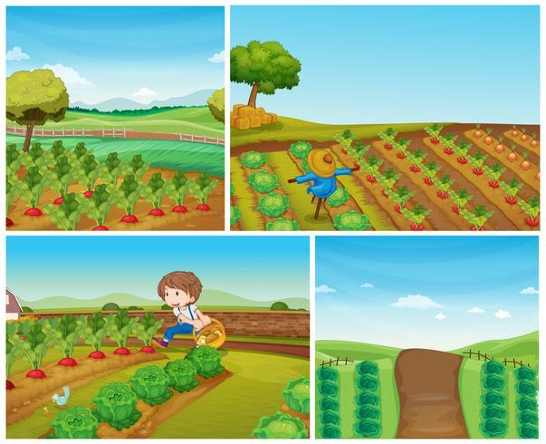 Quattro scene di fattoria con verdure e spaventapasseri vettore
