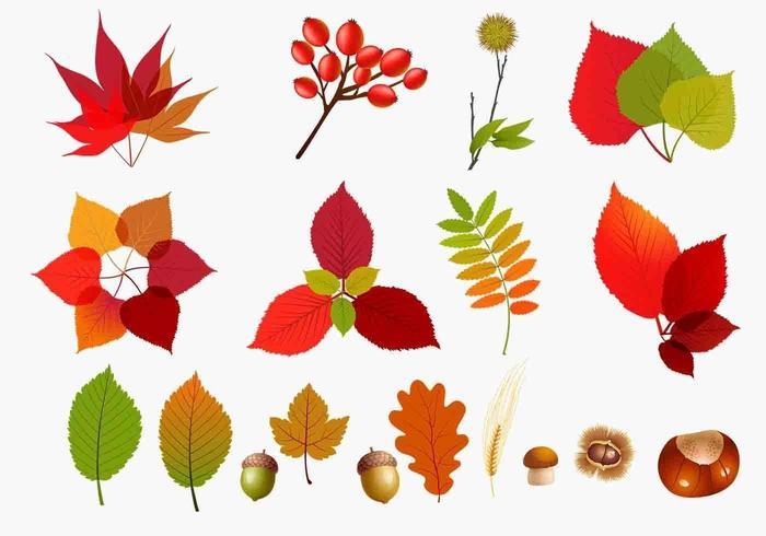 pacchetto di foglie autunnali vettore