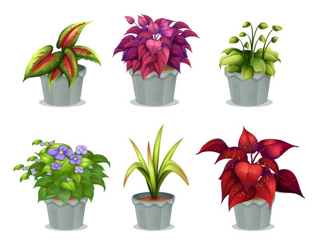 Sei diverse piante vettore