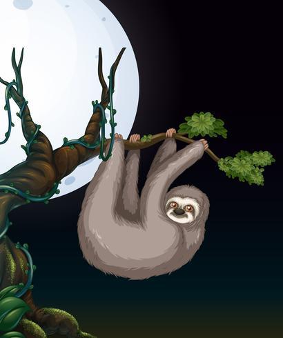 Bradipo al ramo di un albero di notte vettore