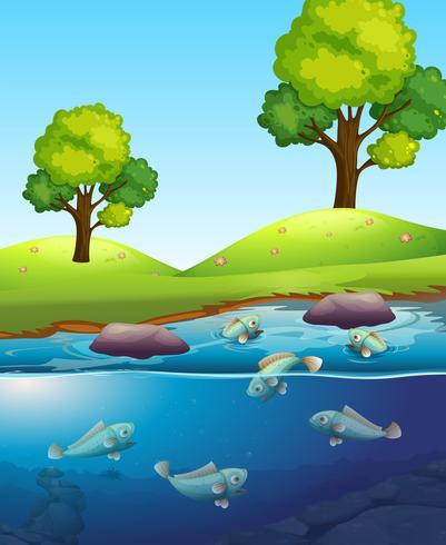 Pesce naturale nel lago vettore