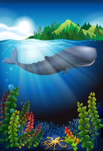 Balena nuota sotto l'oceano vettore