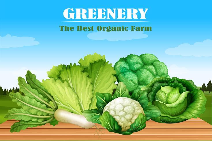 Molti tipi di verdure verdi vettore