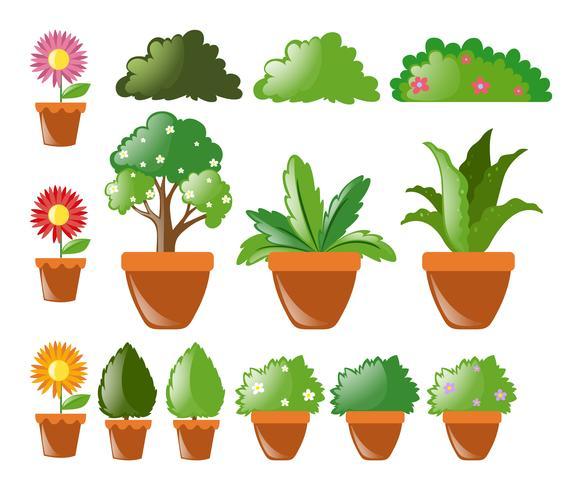 Diversi tipi di piante in vaso vettore