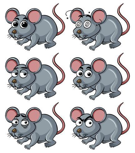 Ratto con diverse espressioni facciali vettore