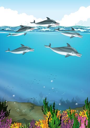 Delfini che nuotano nell'oceano vettore