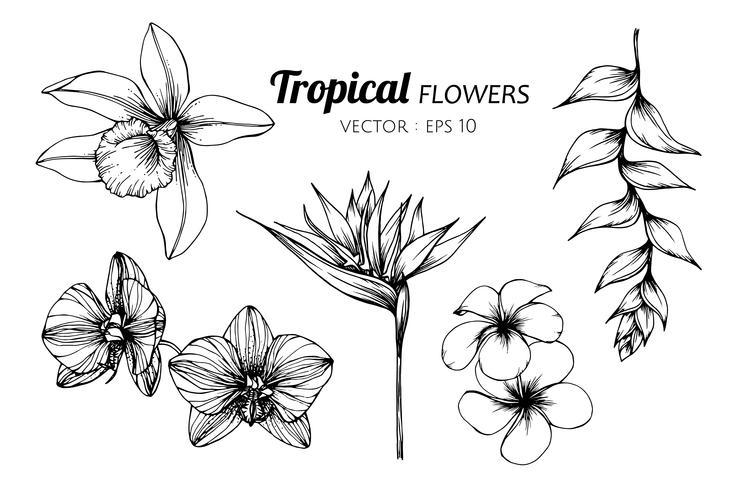 Insieme della raccolta dell'illustrazione del disegno del fiore tropicale. vettore