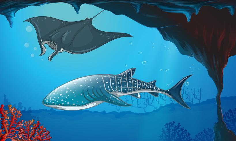 Squalo e stingray che nuotano sott'acqua vettore