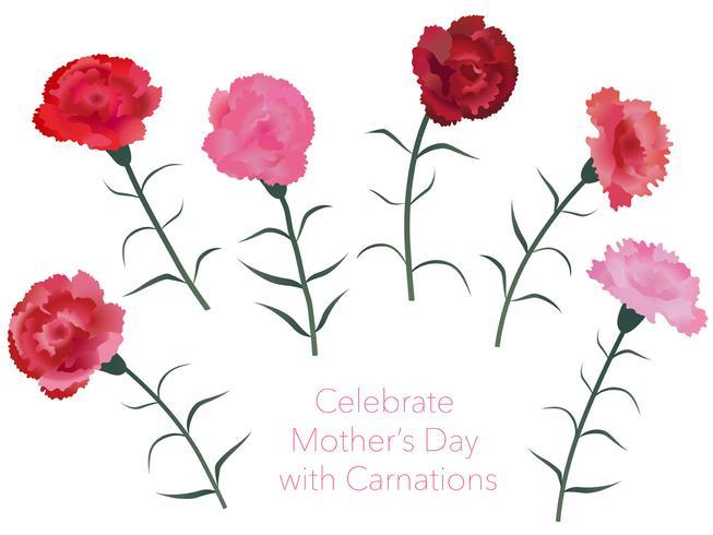 Set di garofani per la festa della mamma, compleanno, matrimonio, ecc. vettore