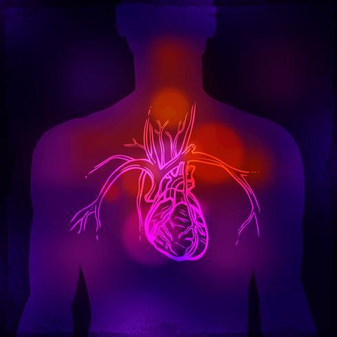 Raggi X del cuore umano vettore
