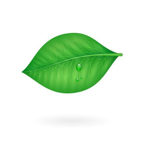 Foglia verde vettore