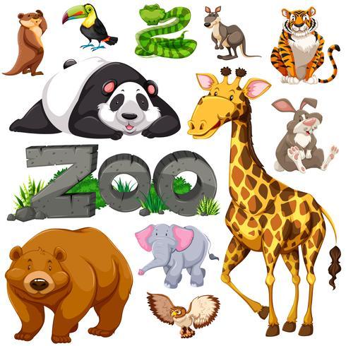 Zoo e diversi tipi di animali selvatici vettore