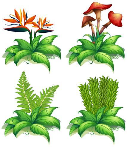 Quattro diversi tipi di piante su sfondo bianco vettore