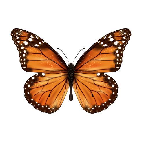 Farfalla realistica isolata vettore