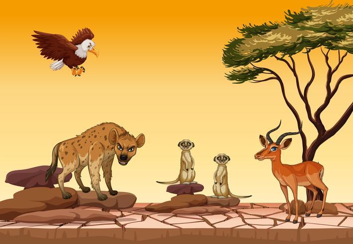Animali selvatici nella foresta secca vettore