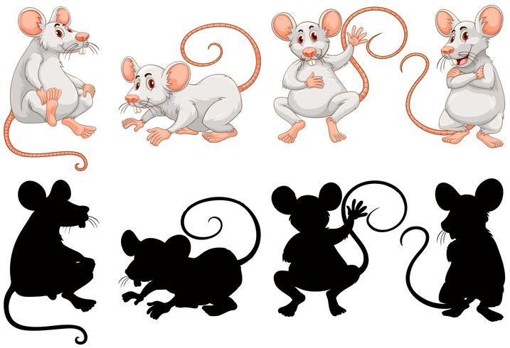 Ratti bianchi in quattro azioni vettore