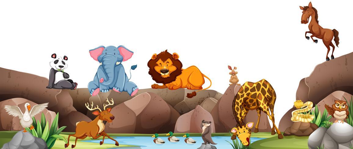 Animali selvaggi vicino allo stagno vettore
