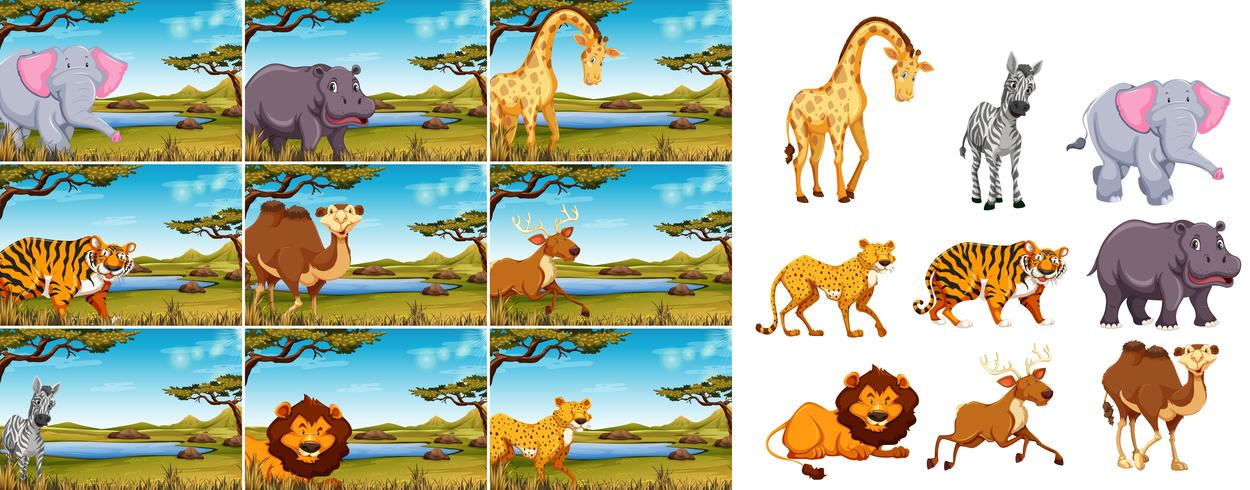 Set di animali selvatici in natura vettore