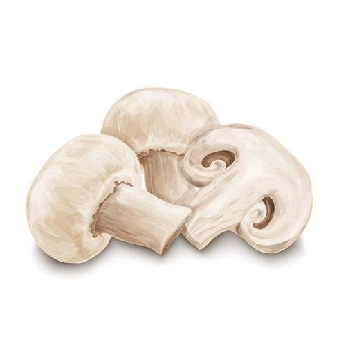 Funghi champignon isolati vettore