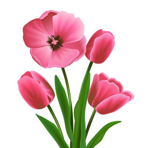 Tulipano rosa fiore vettore