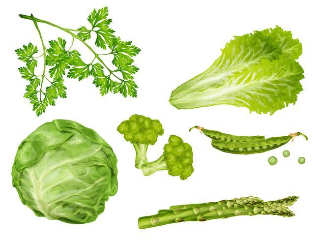 Set di verdure verdi vettore