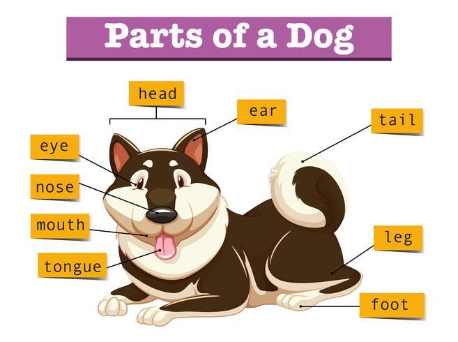 Diagramma che mostra le parti del cane vettore