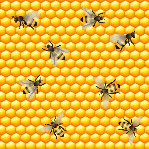 Reticolo senza giunte di miele delle api vettore